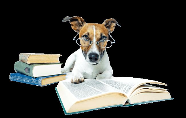 Dogcamping Rechtliches